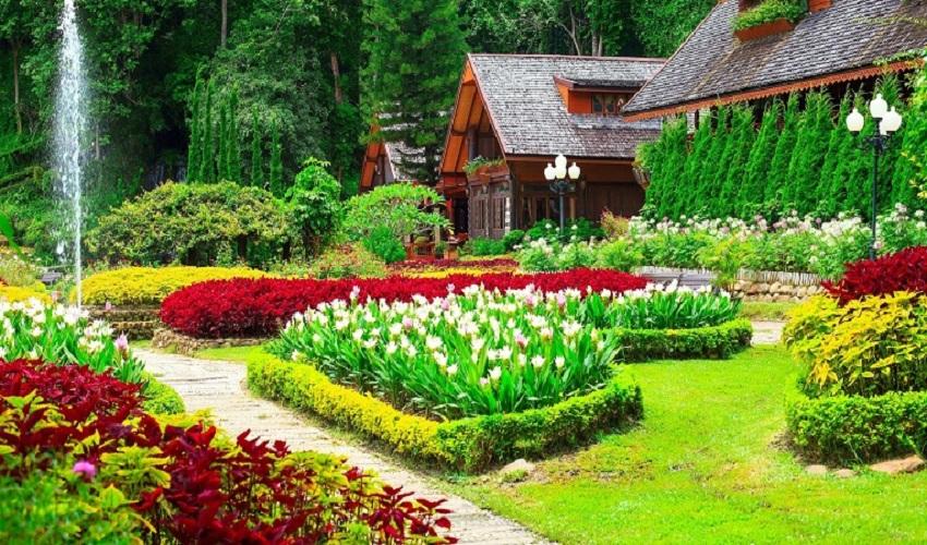 Best Gardening Tips for Beginners